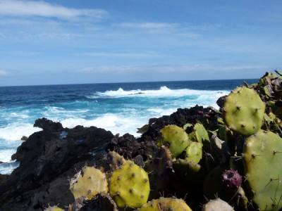 Açores - sortie  en mer