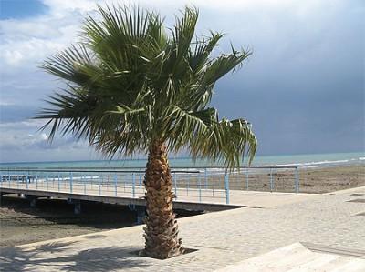 larnaca plage
