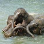 baby-elephant-256657_1280