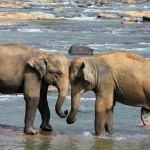 elephant-471480_1280