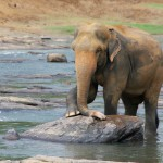 elephant-471487_1280