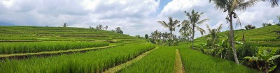 bali rizieres